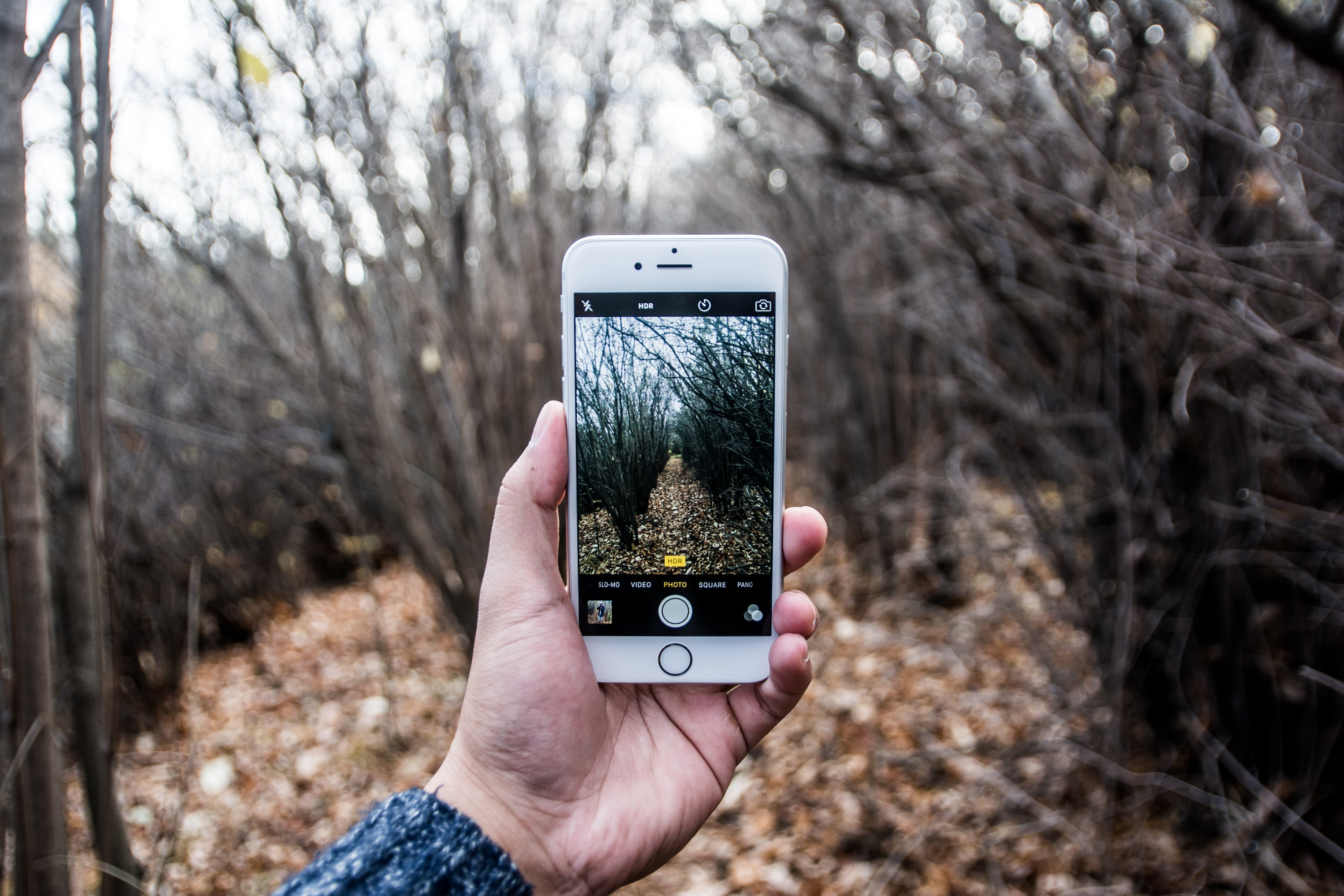 A person taking a picture with an iPhone in a forest in the autumn