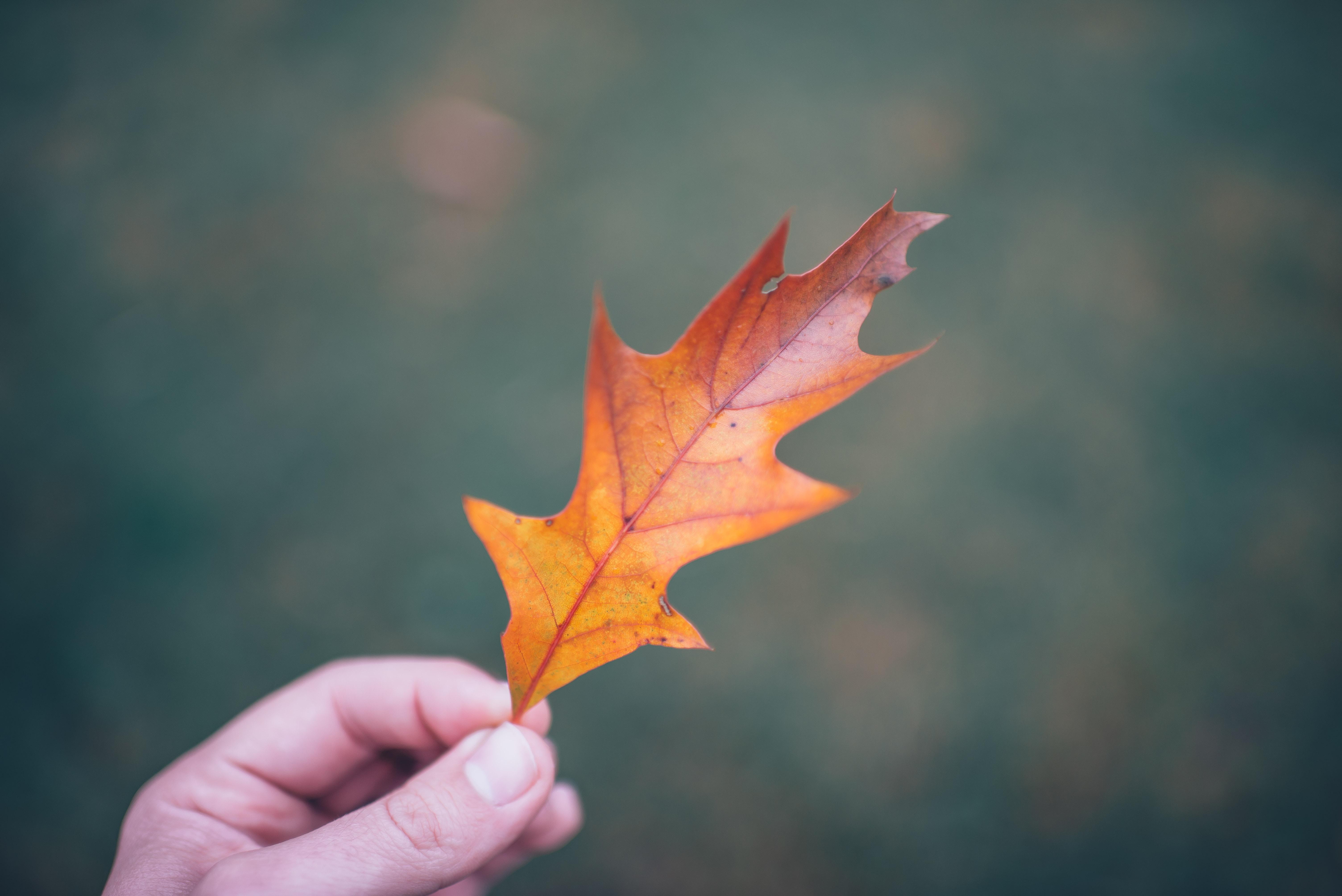 A person holding an orange leaf.