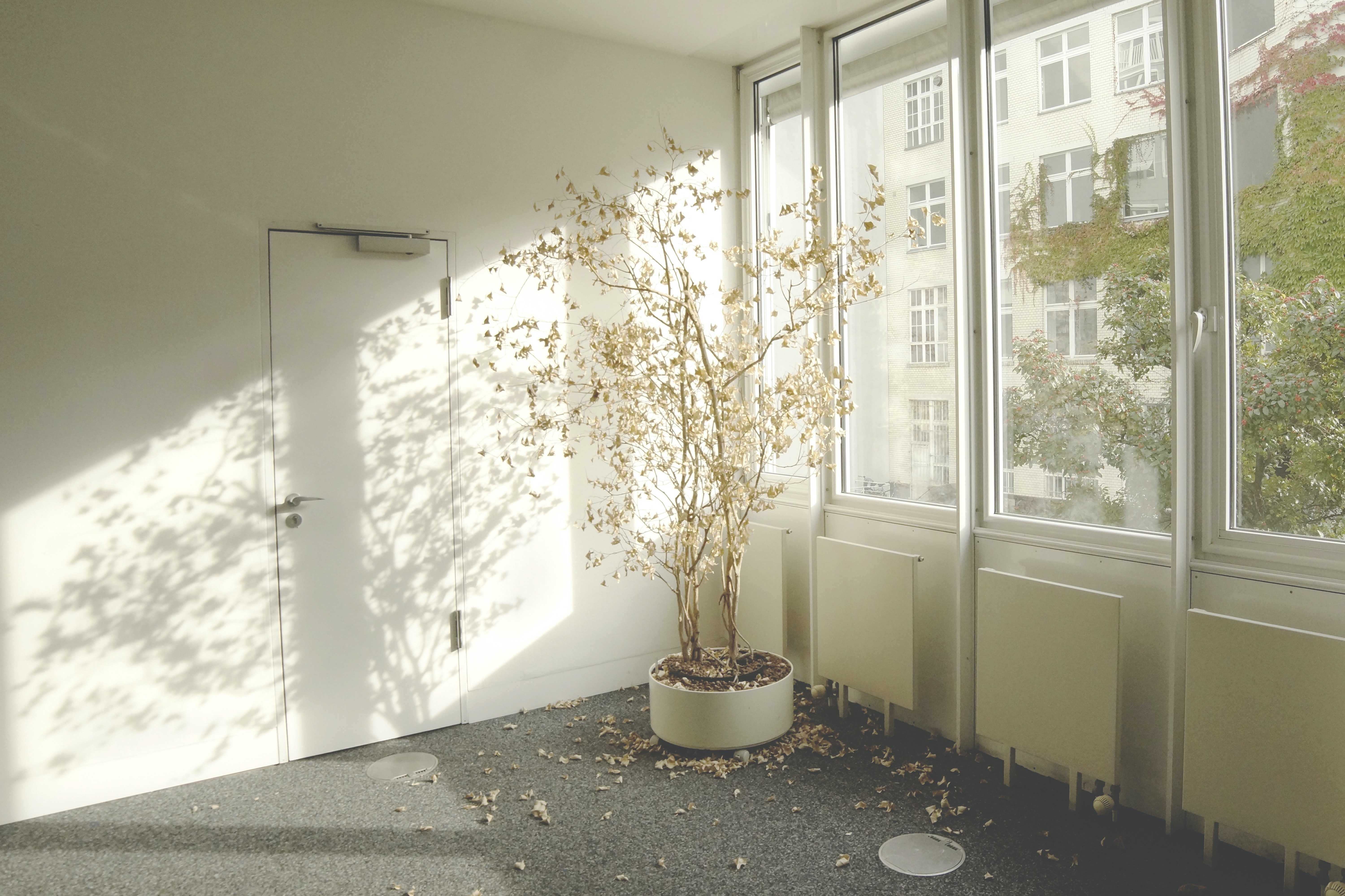 Dying tree inside an empty office building sheds its leaves