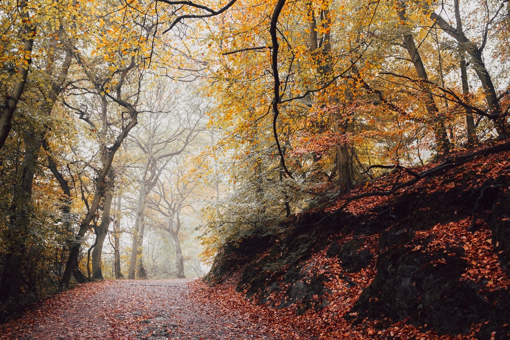 photo of pathway surrounded by brown leafed trees