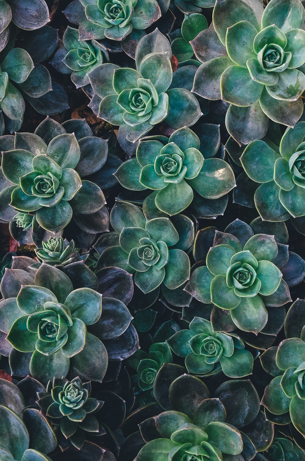 top view of green succulent plants