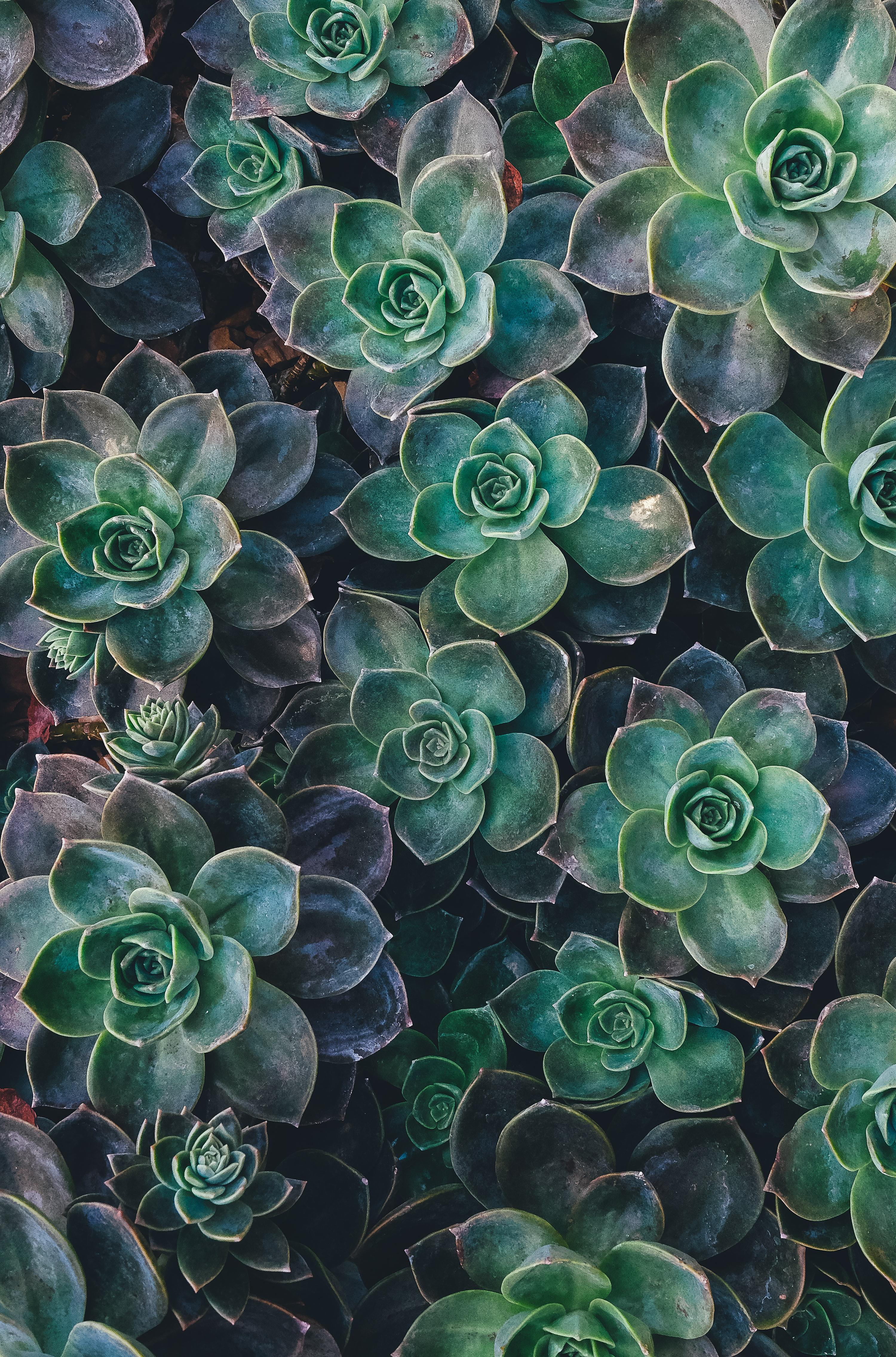 100 Succulent Pictures Download Free Images On Unsplash