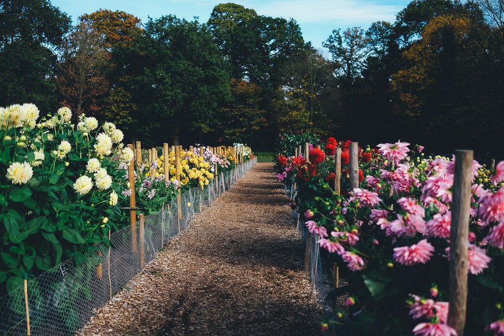 assorted-color bed of flowers