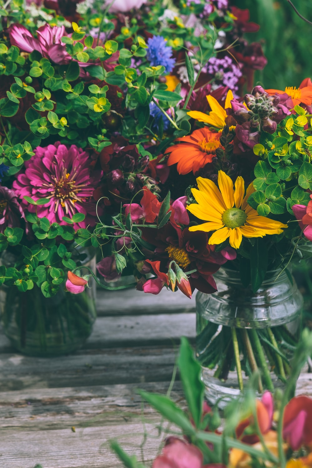 assorted-color petaled flowers