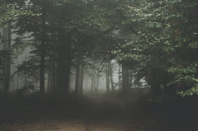 Misty forest trail