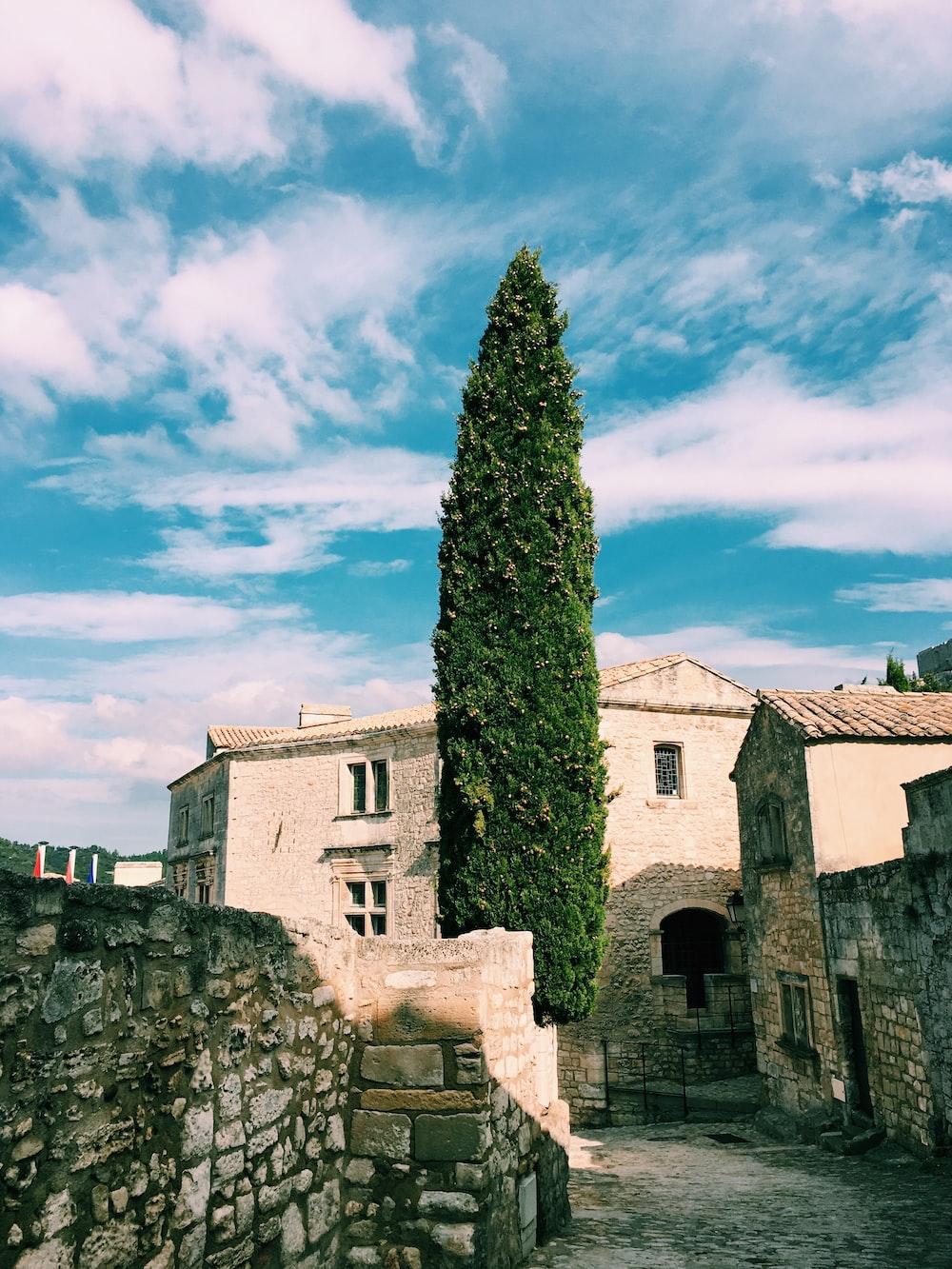 green leaf tree beside walls near building