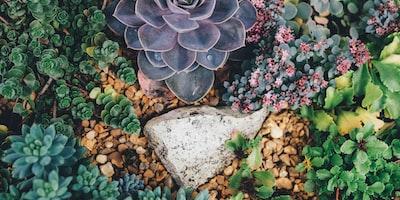 Choosing the Best Plants for a Rock Garden