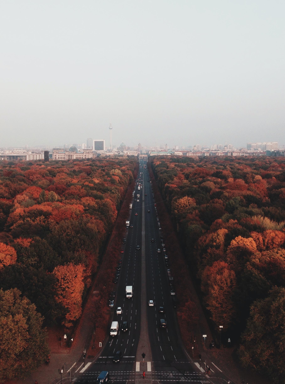 Tree-lined road with Siegessäule skyline.