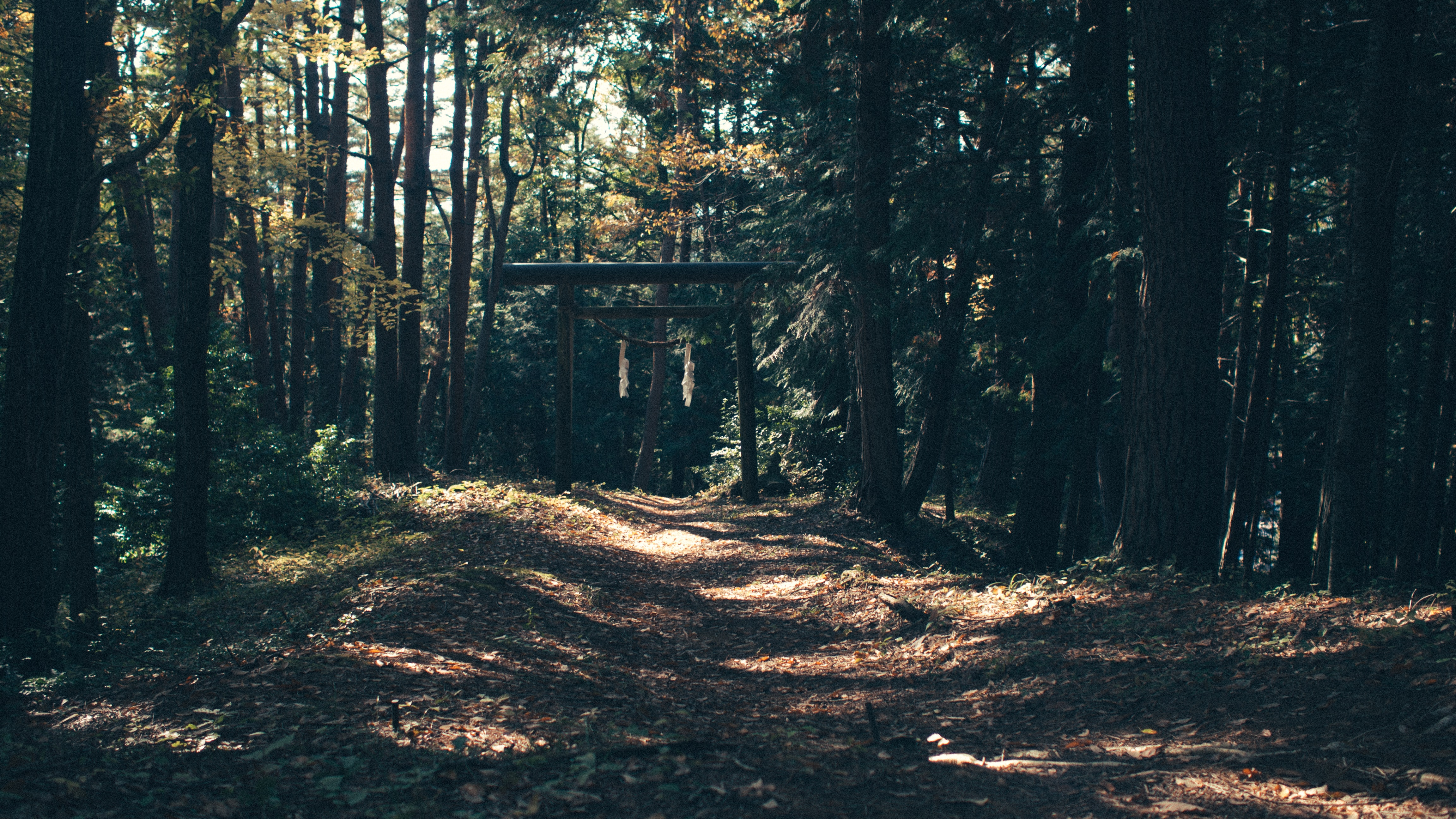A wooden gateway at the end of a trail in a forest