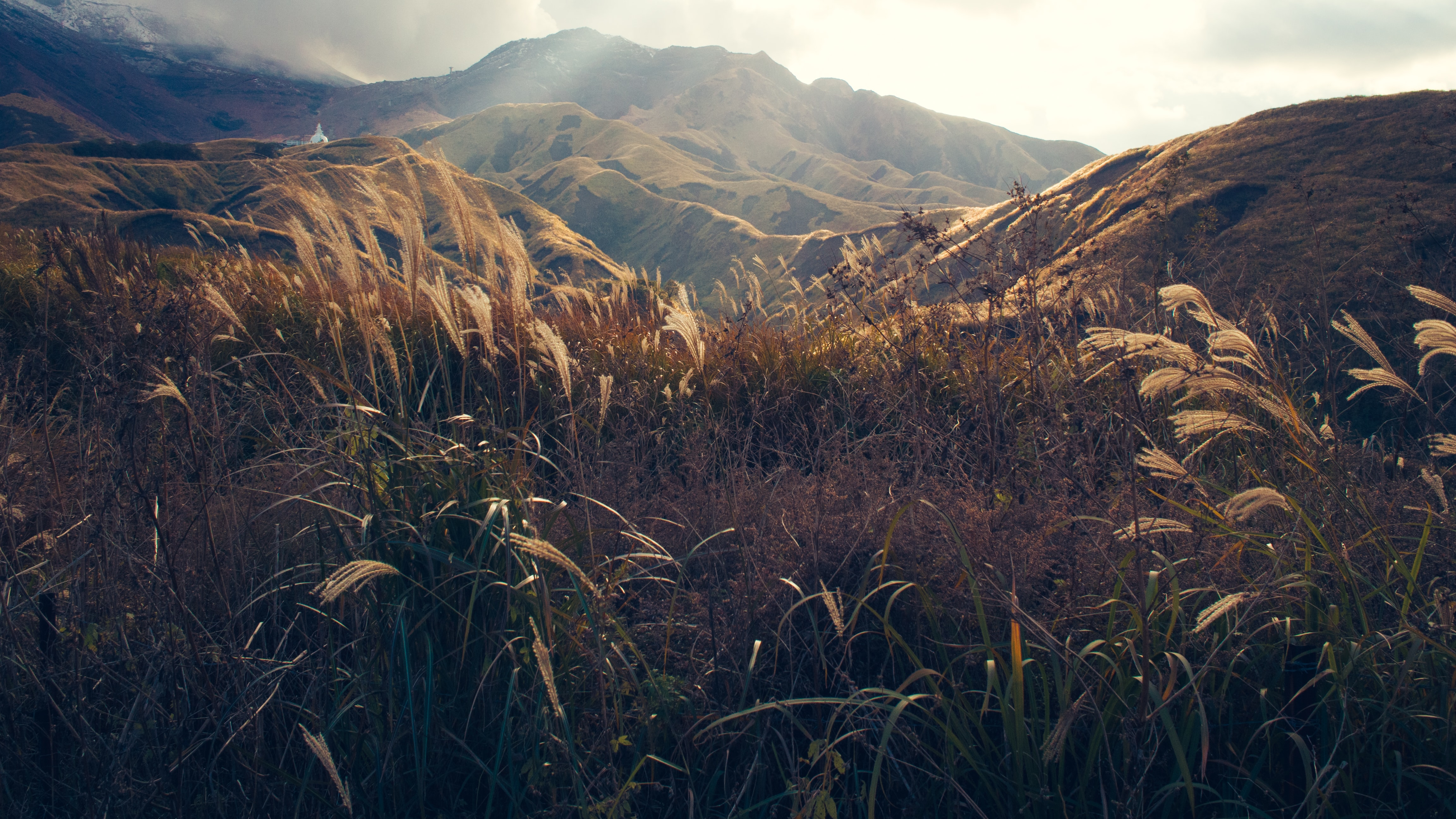 Tall blades of golden grass swaying in the wind in front of a scenic mountain landscape