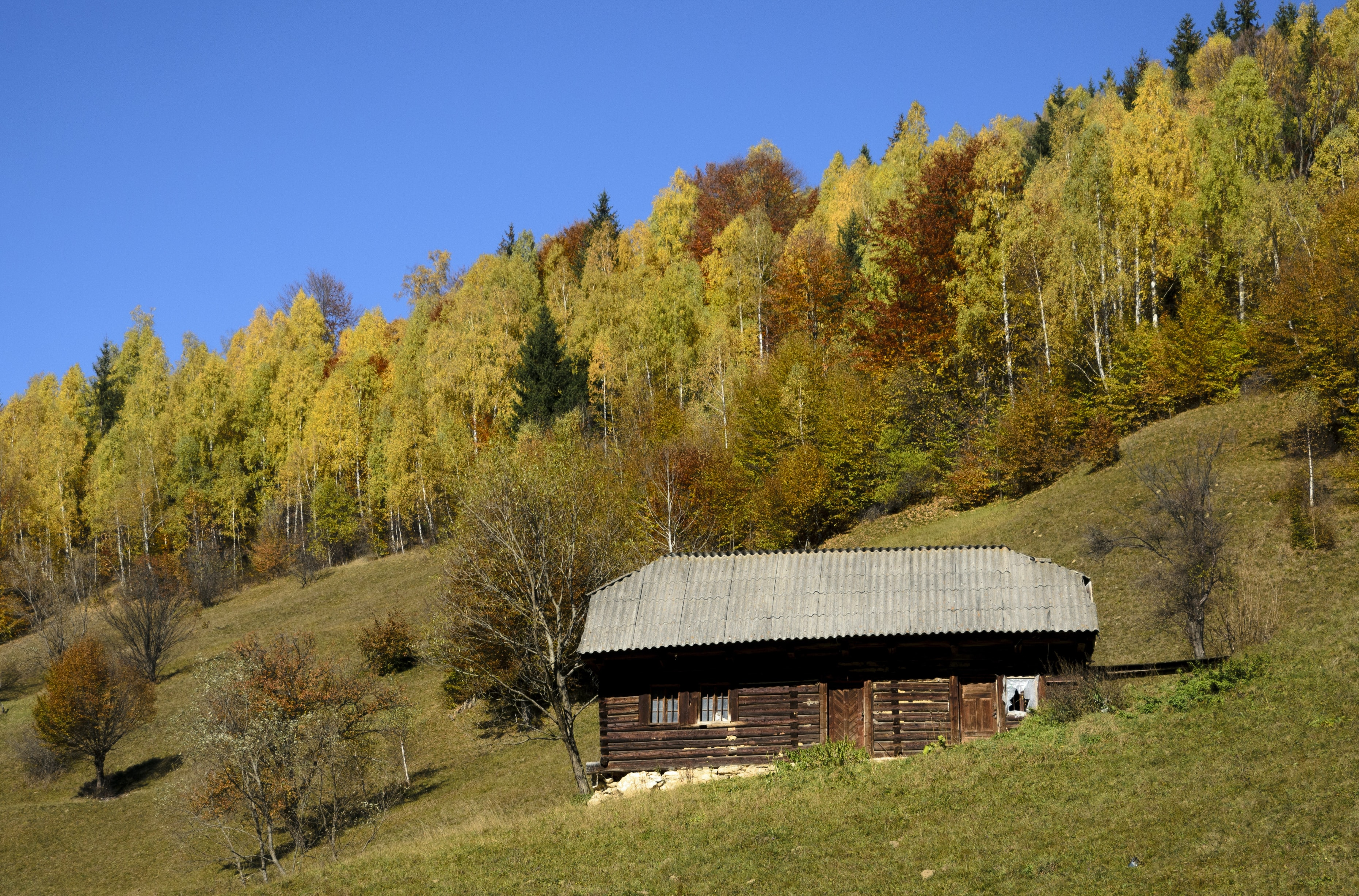 brown wooden cabin near forest