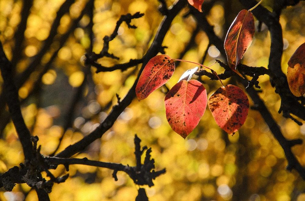 macro shot of brown tree leaves