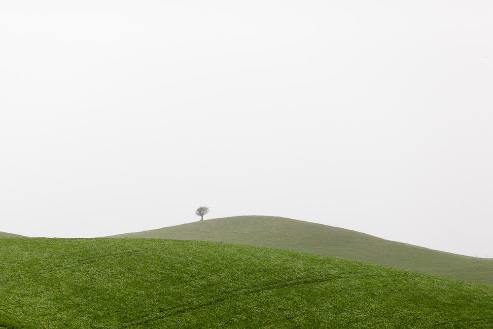 photography of green grass during daytime