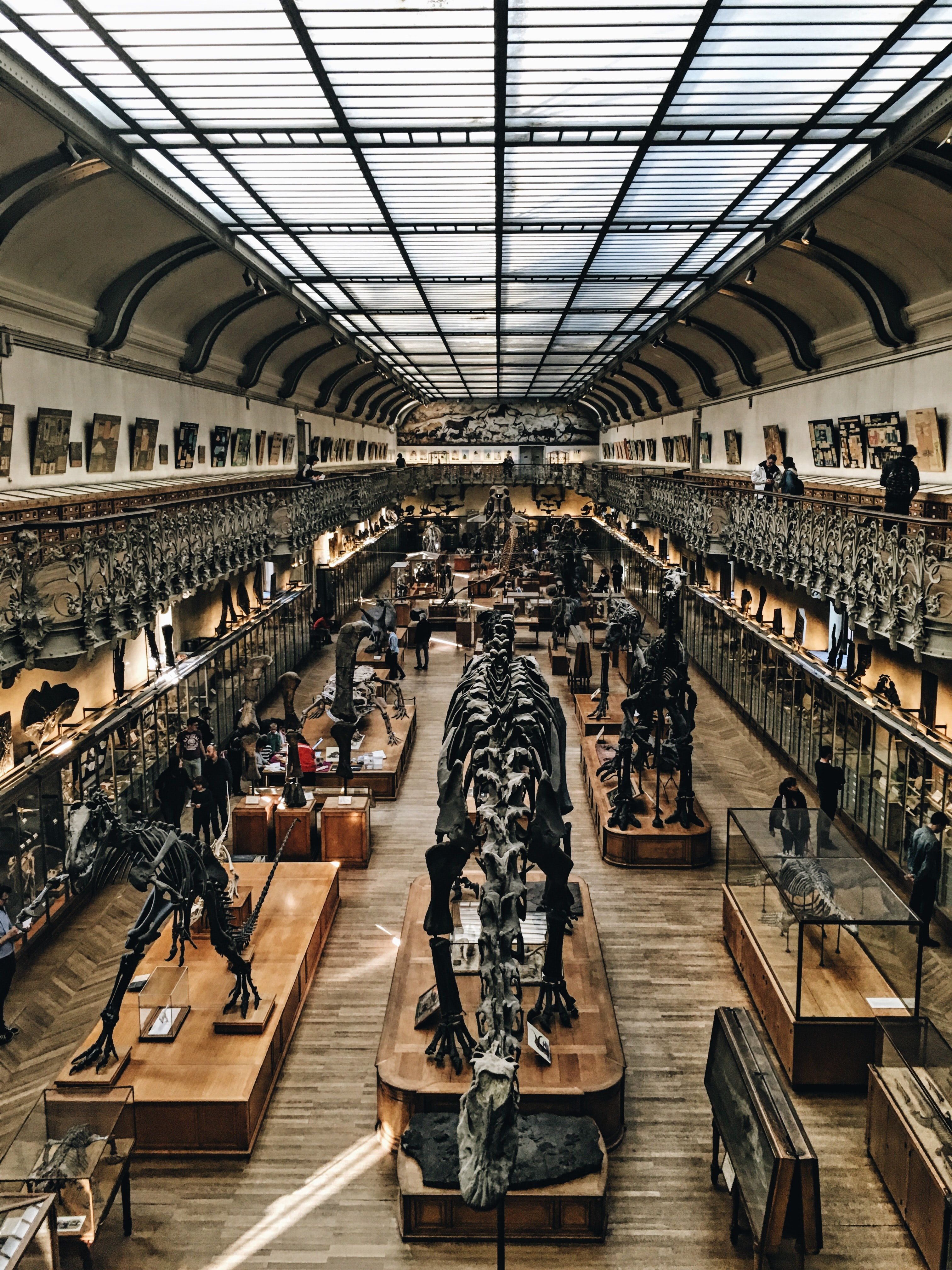 A museum with dinosaur and reptile skeletons