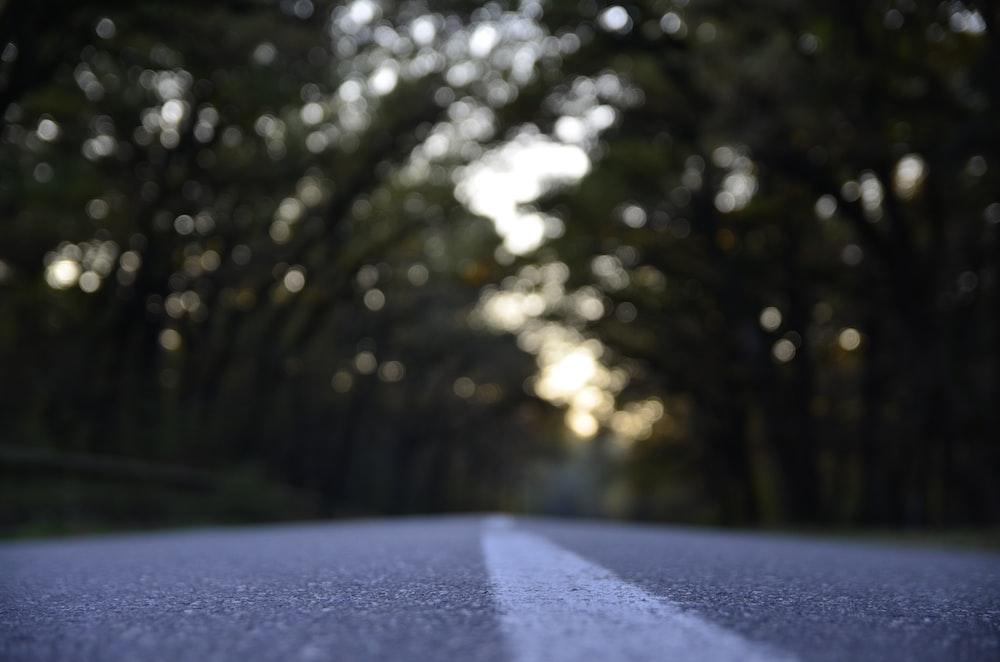 black asphalt road between tree line