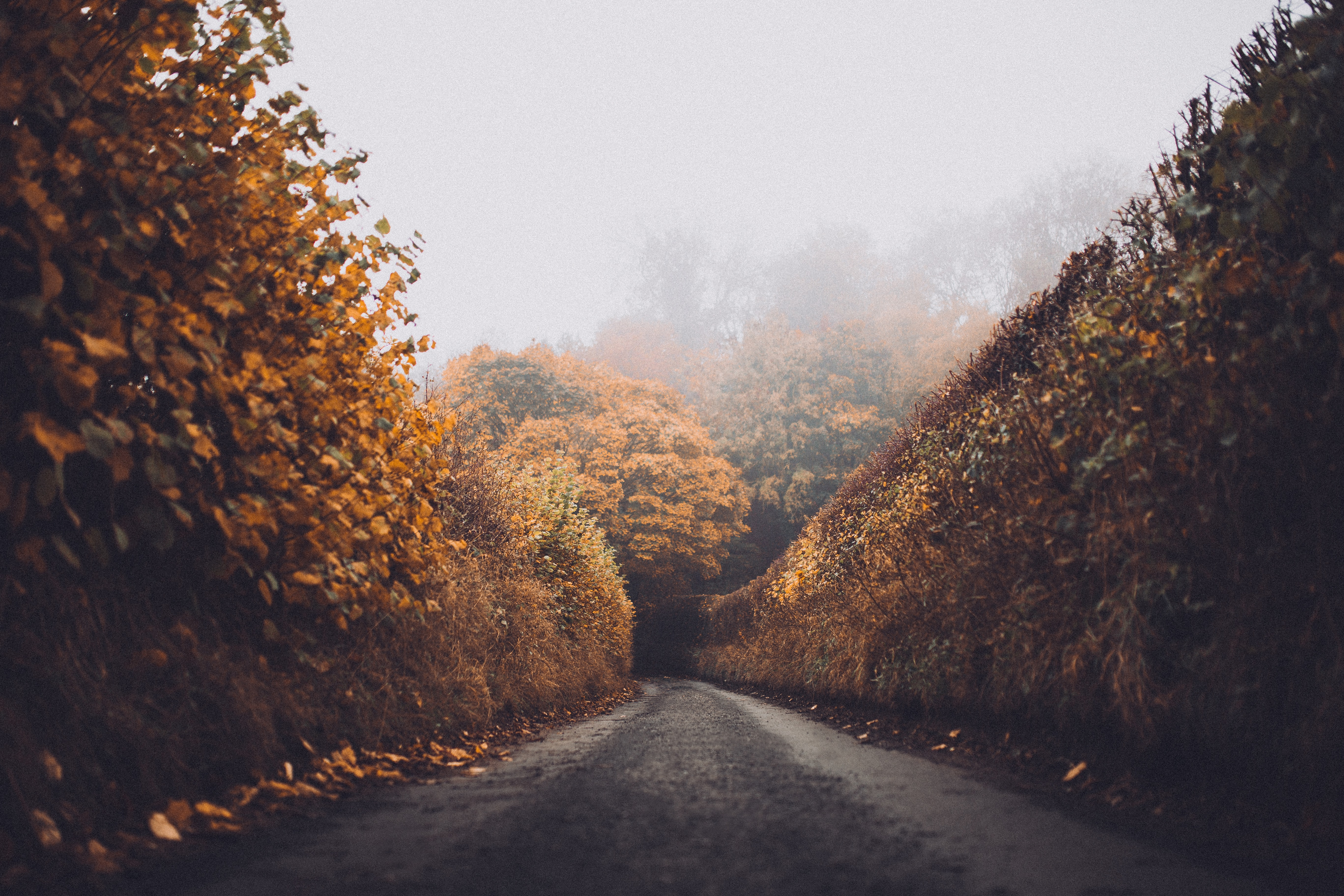 Autumn-colored hedges on the sides of a narrow dirt road