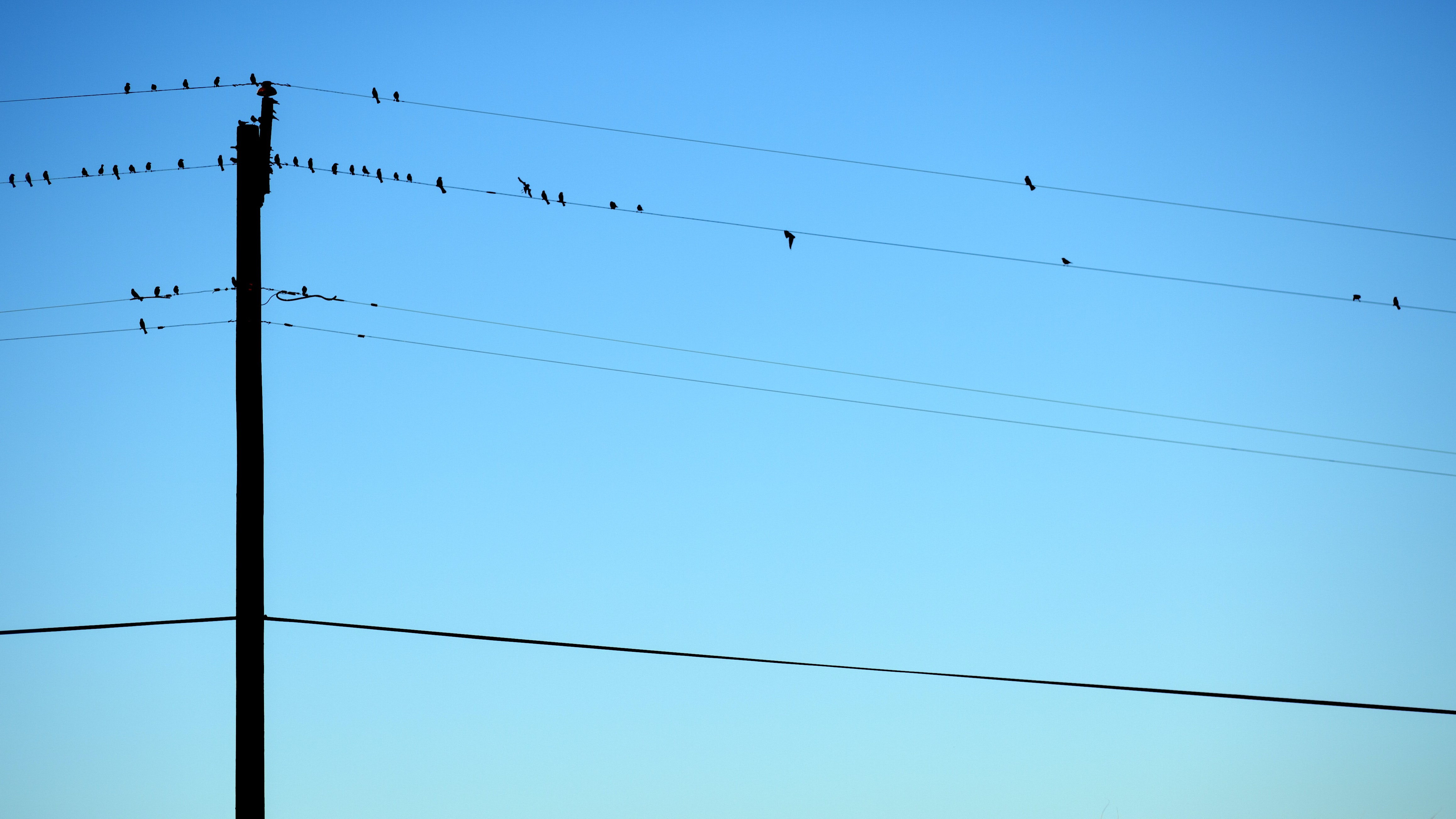 Birds sit on telephone wires against a blue sky