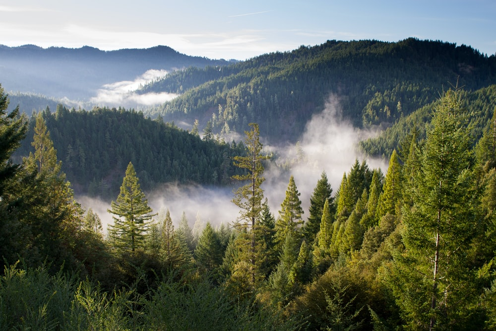 birds eye photo of forest and mountains