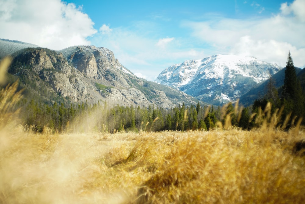 field of brown grasses within mountain range