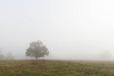 1268. Ködös tájakon