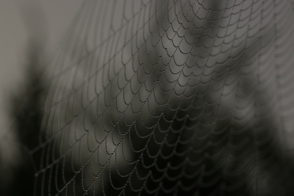 close up shot of spider web