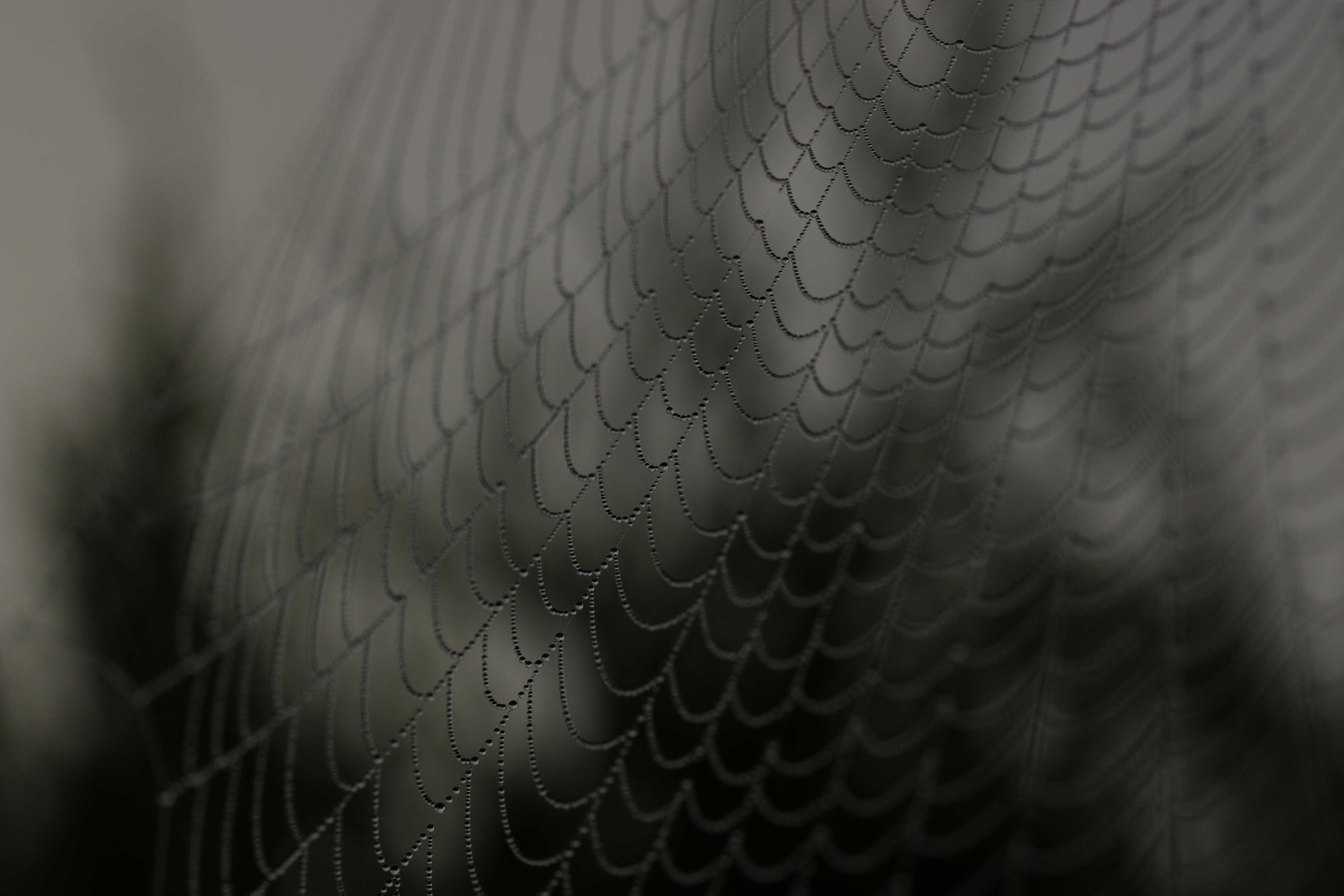 close up shot of spider web
