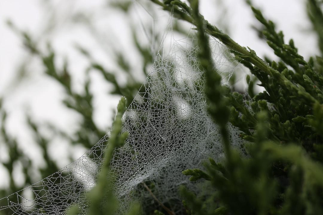 Dew on a cobweb