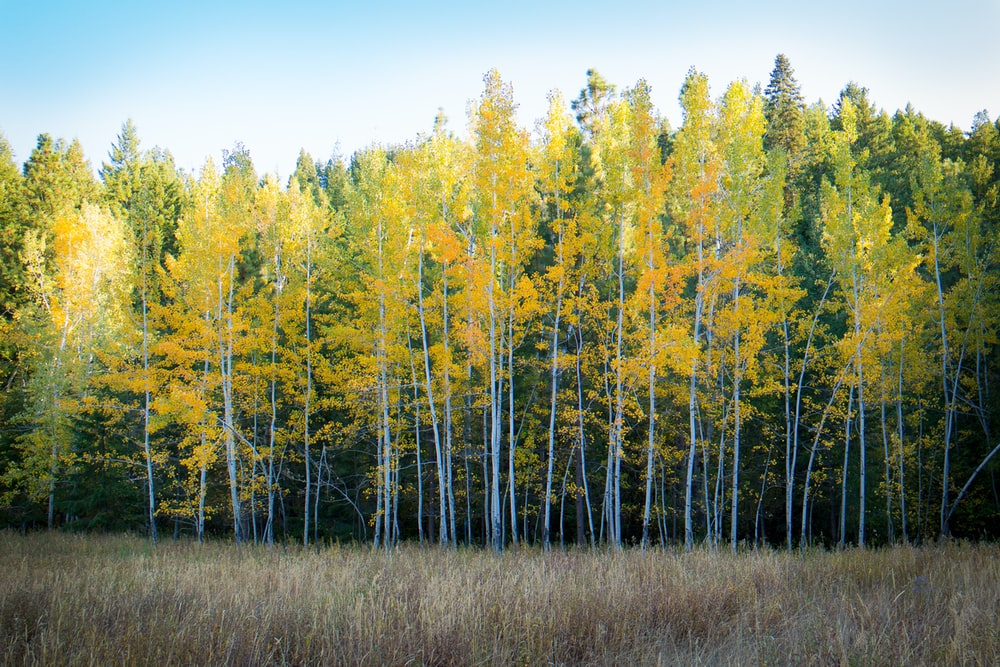 trees and brown grass field in forest nature photography