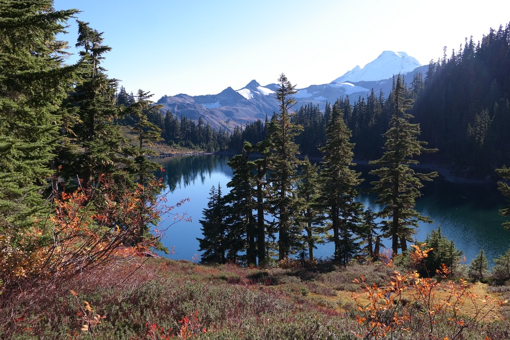 lake surrounded by pine trees