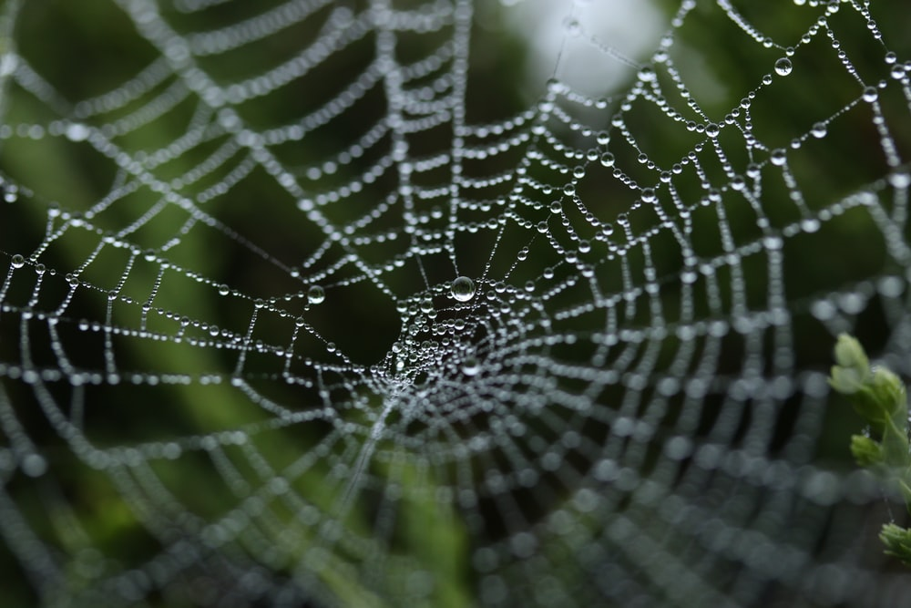 tilt shift photography of dew on spider web