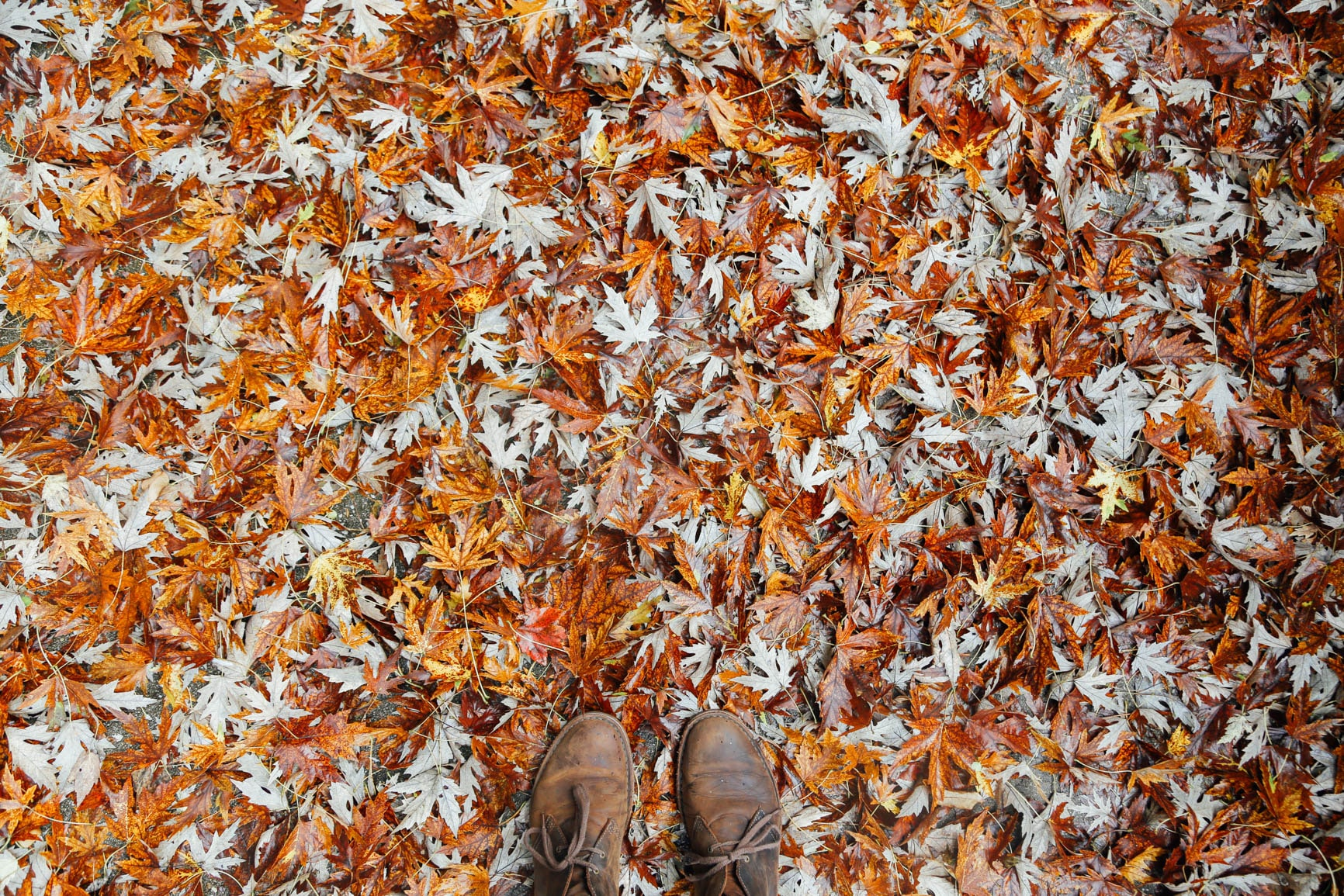 A person wearing boots standing on fallen orange leaves in autumn