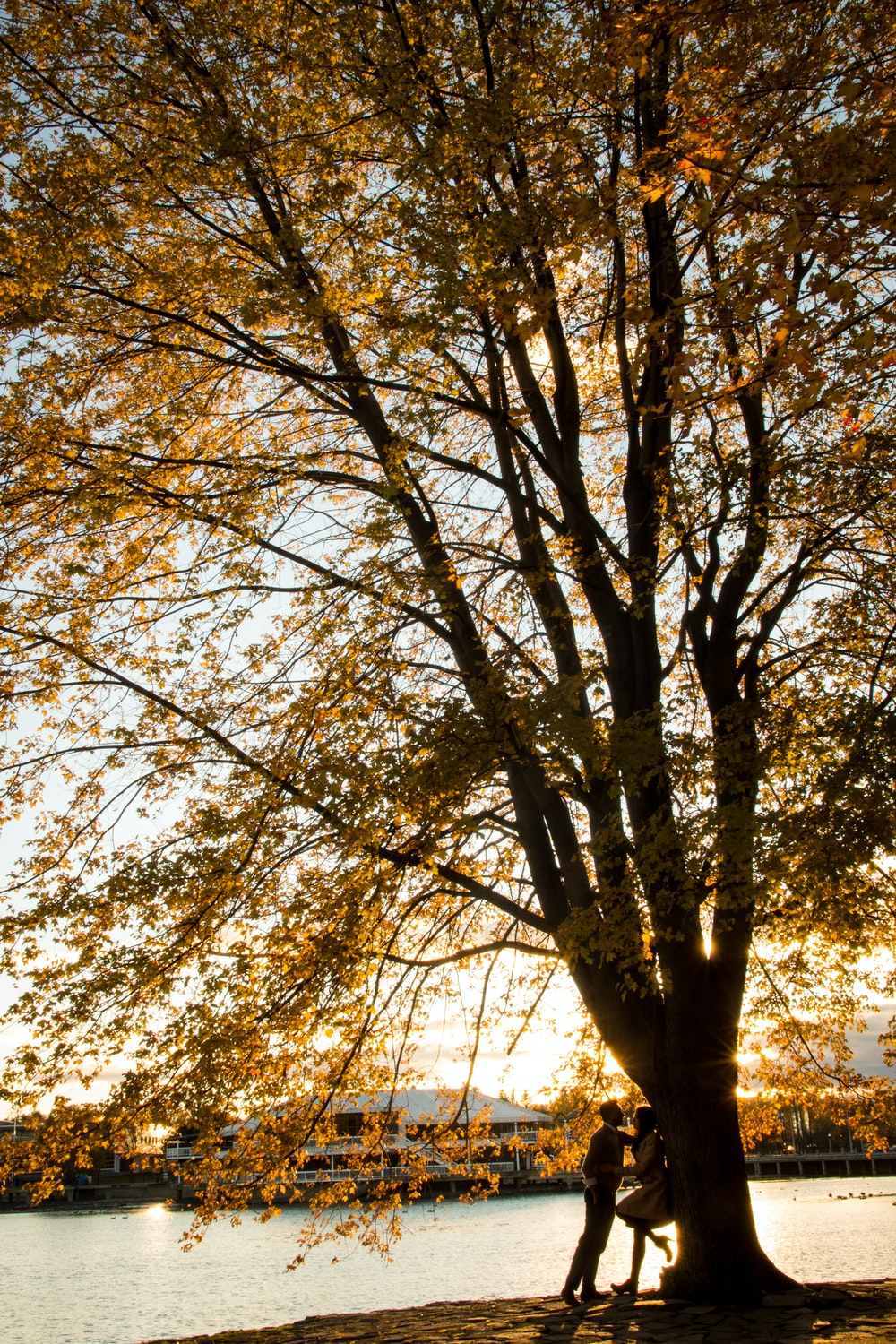 couple under brown tree during sunset