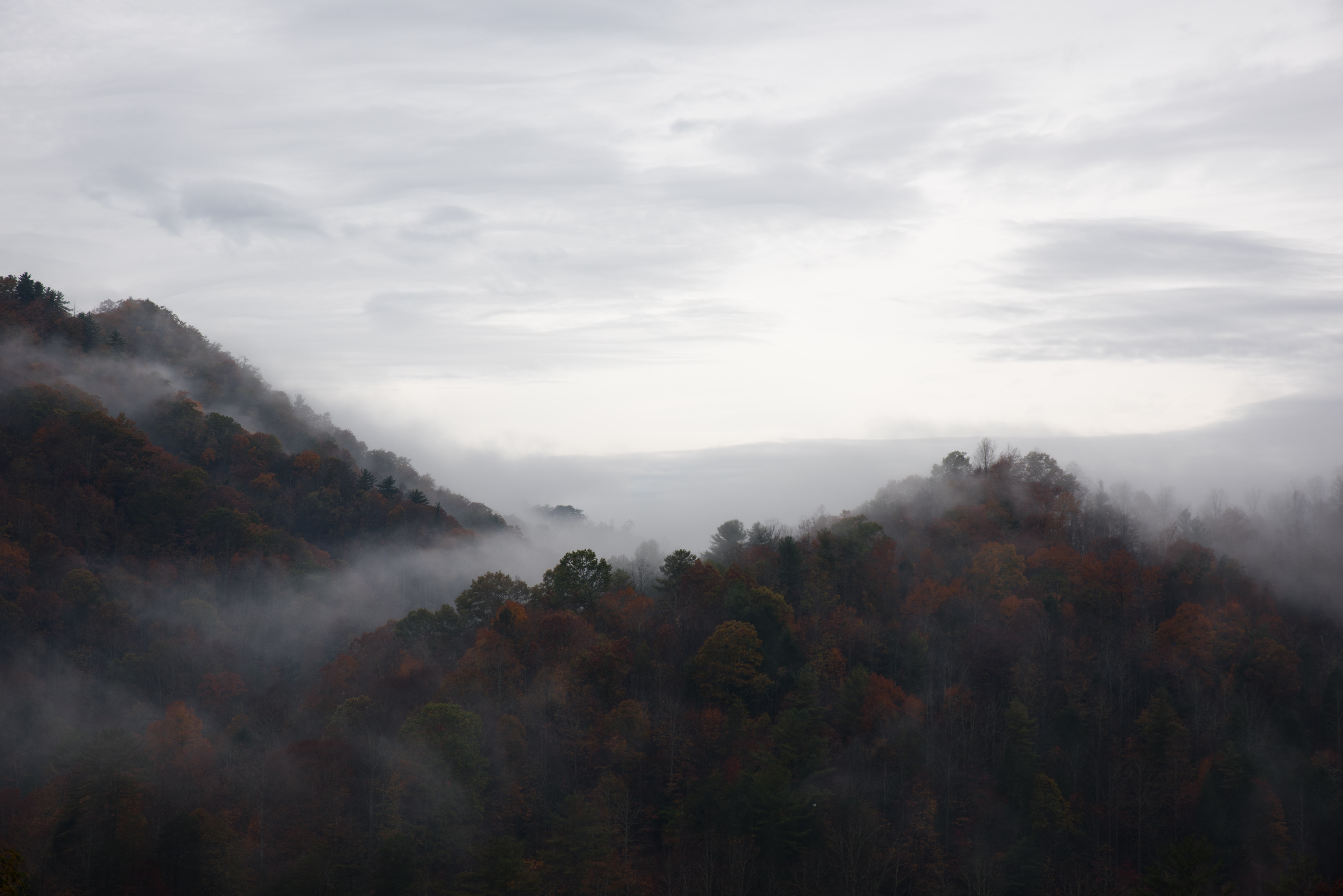 Colorful trees on hills wreathed in fog