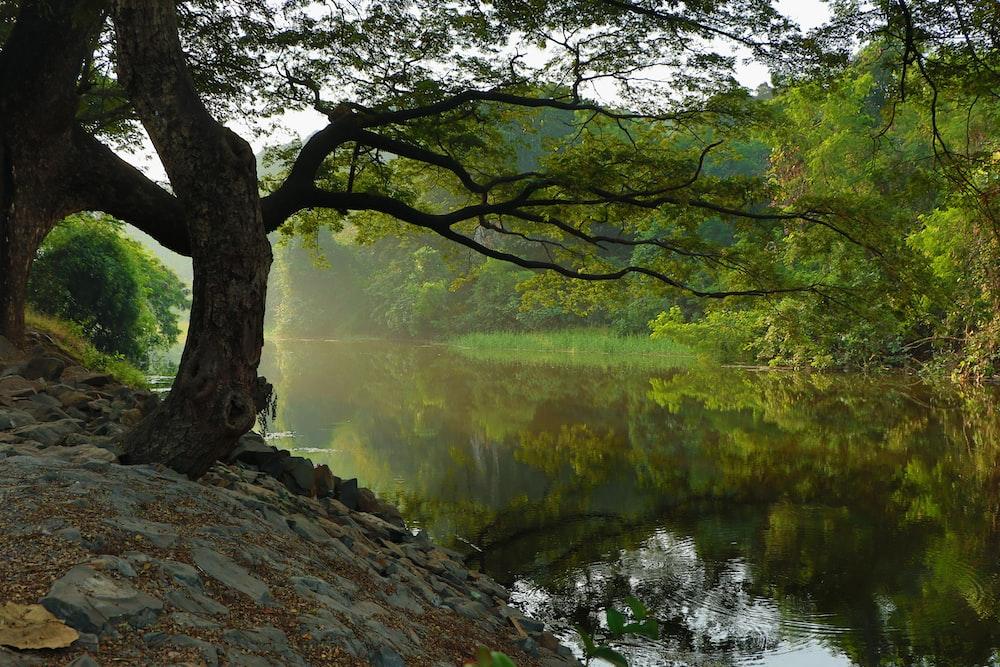 bare tree near lake during daytime
