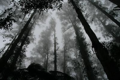 Dark forest canopy