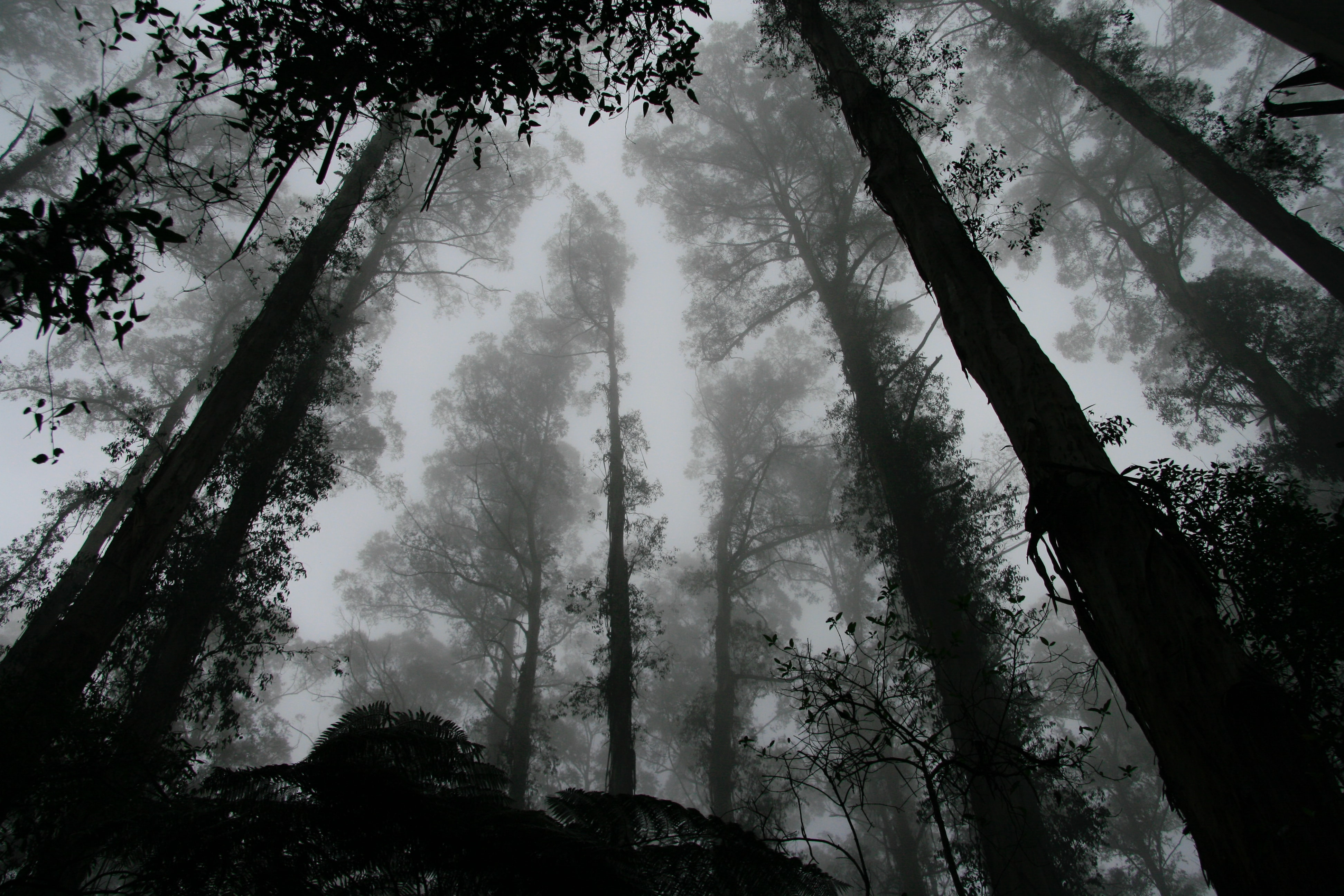 A dark low-angle shot of towering trees in the middle of the forest