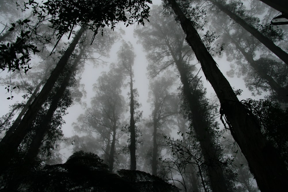 worms eye view of fog covered forest