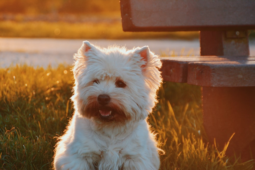 dog sitting on grass field beside bench at golden hour