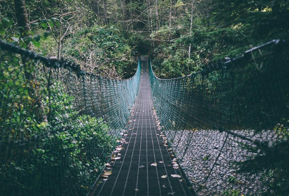 green and black hanging bridge