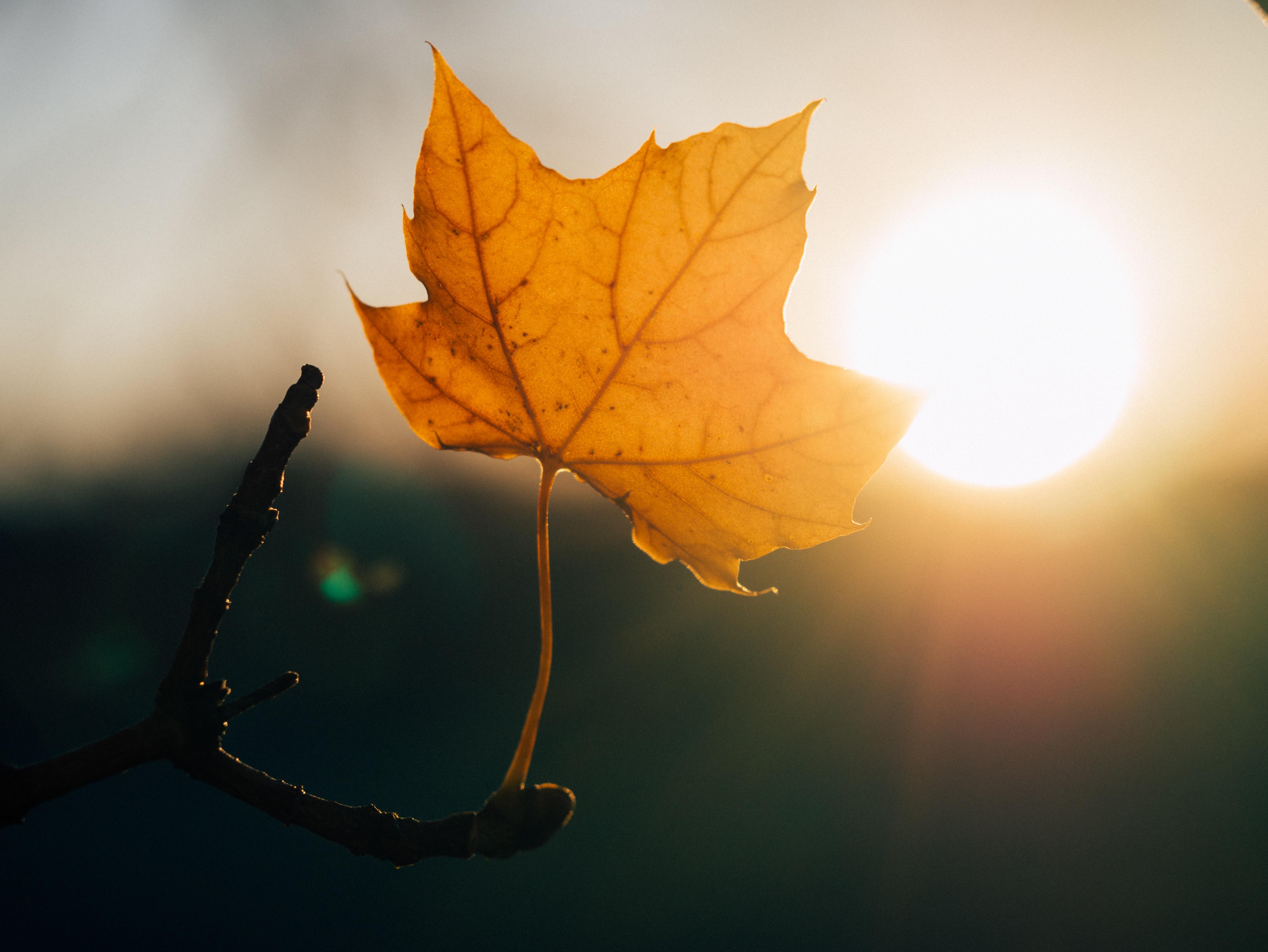 A yellow leaf blocking a sunset.