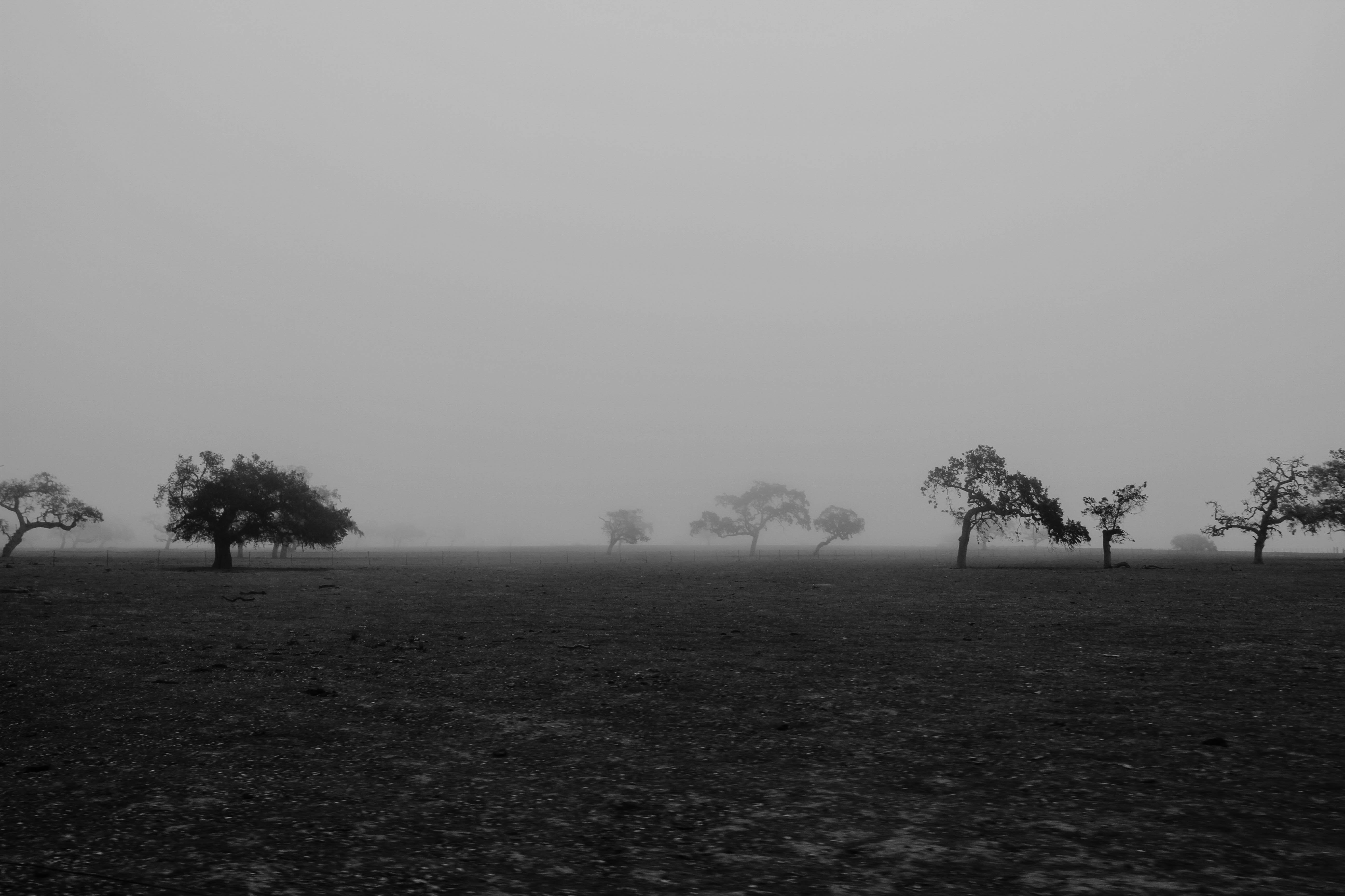 Monochromatic view of a desolate field with trees in the fog