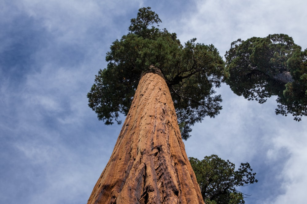 low angle of tall tree