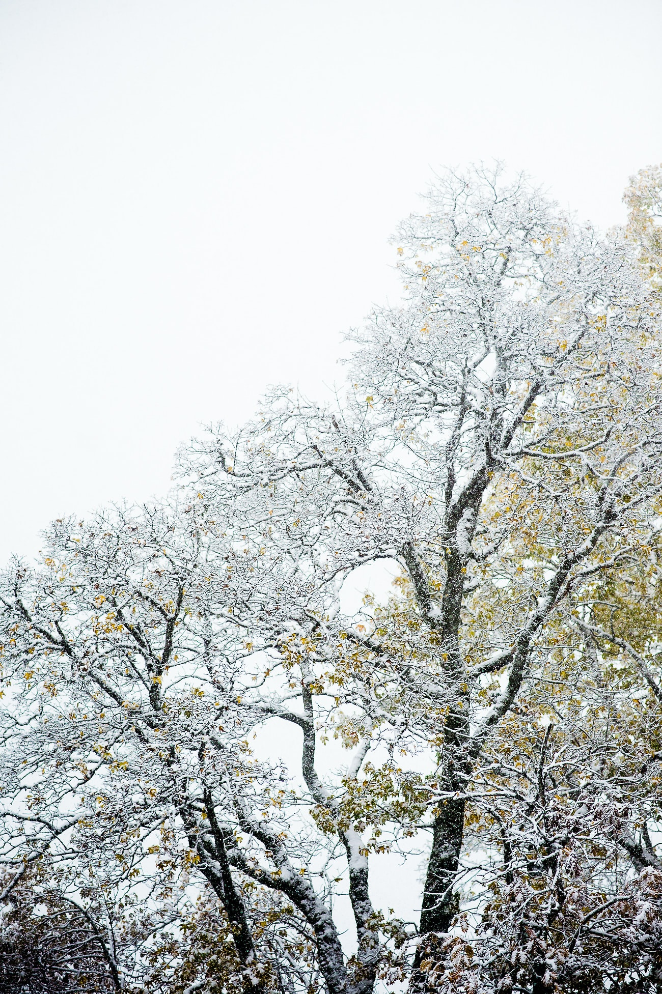 snow-covered tree during daytime