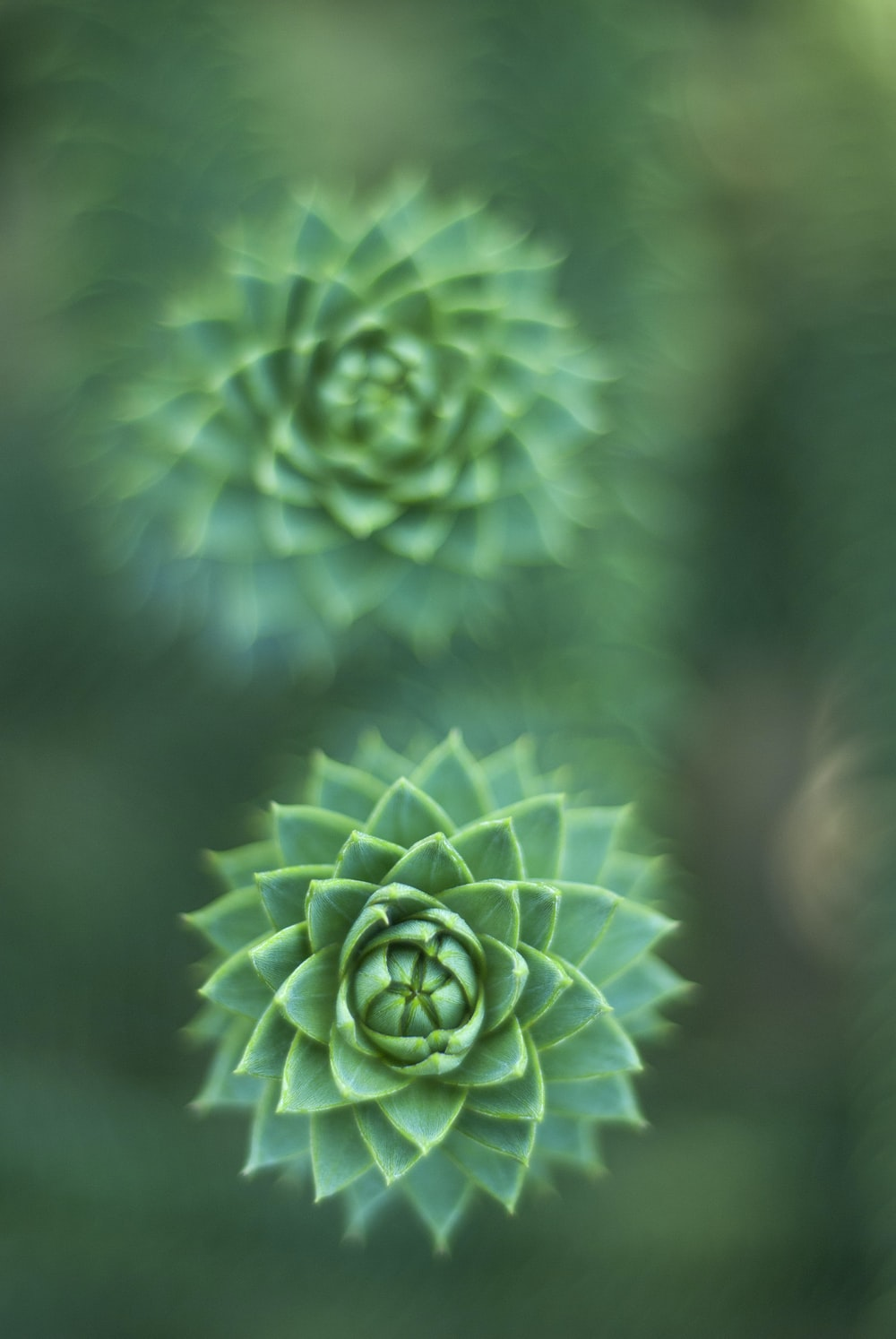 selective focus photography of green succulent plant