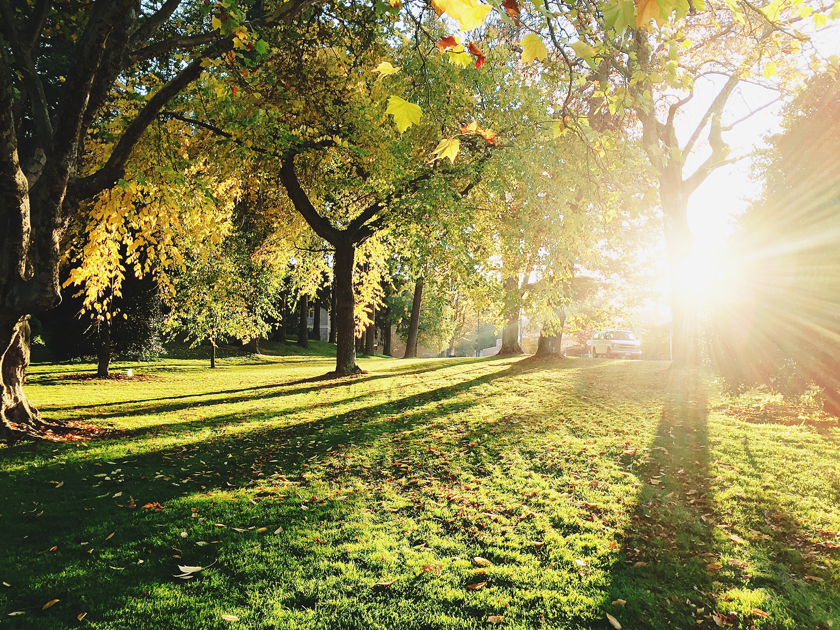 A grassy area with sunlight coming through the trees in Bellingham