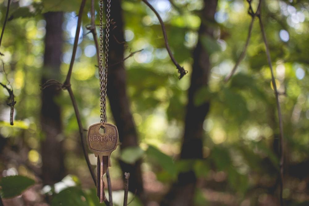 gray key hanging on tree