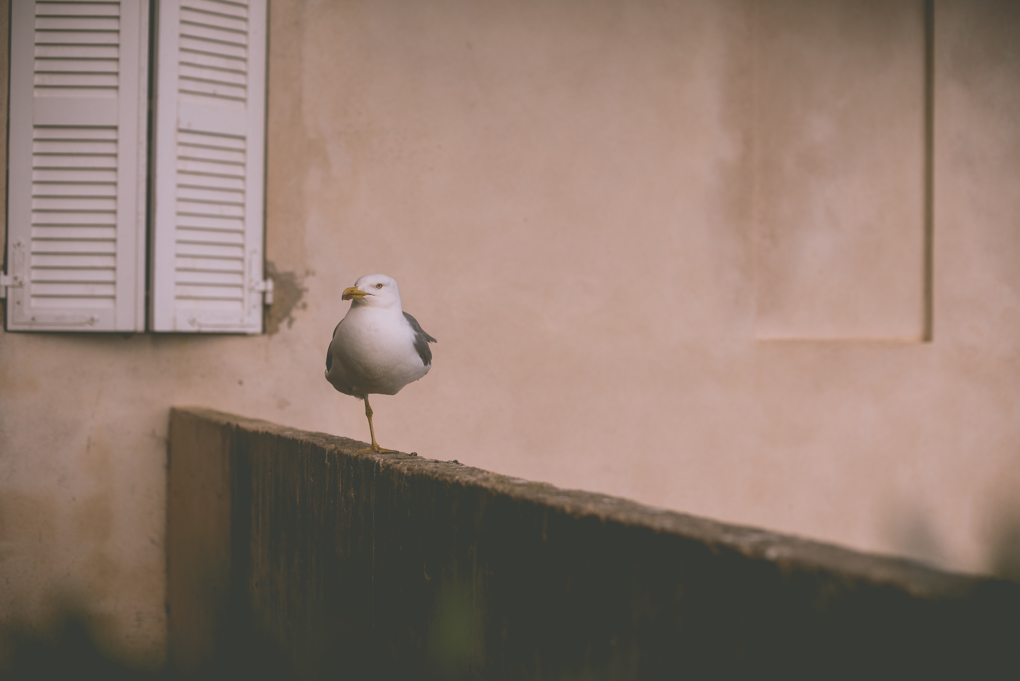 white bird perching on brown wooden fence near window