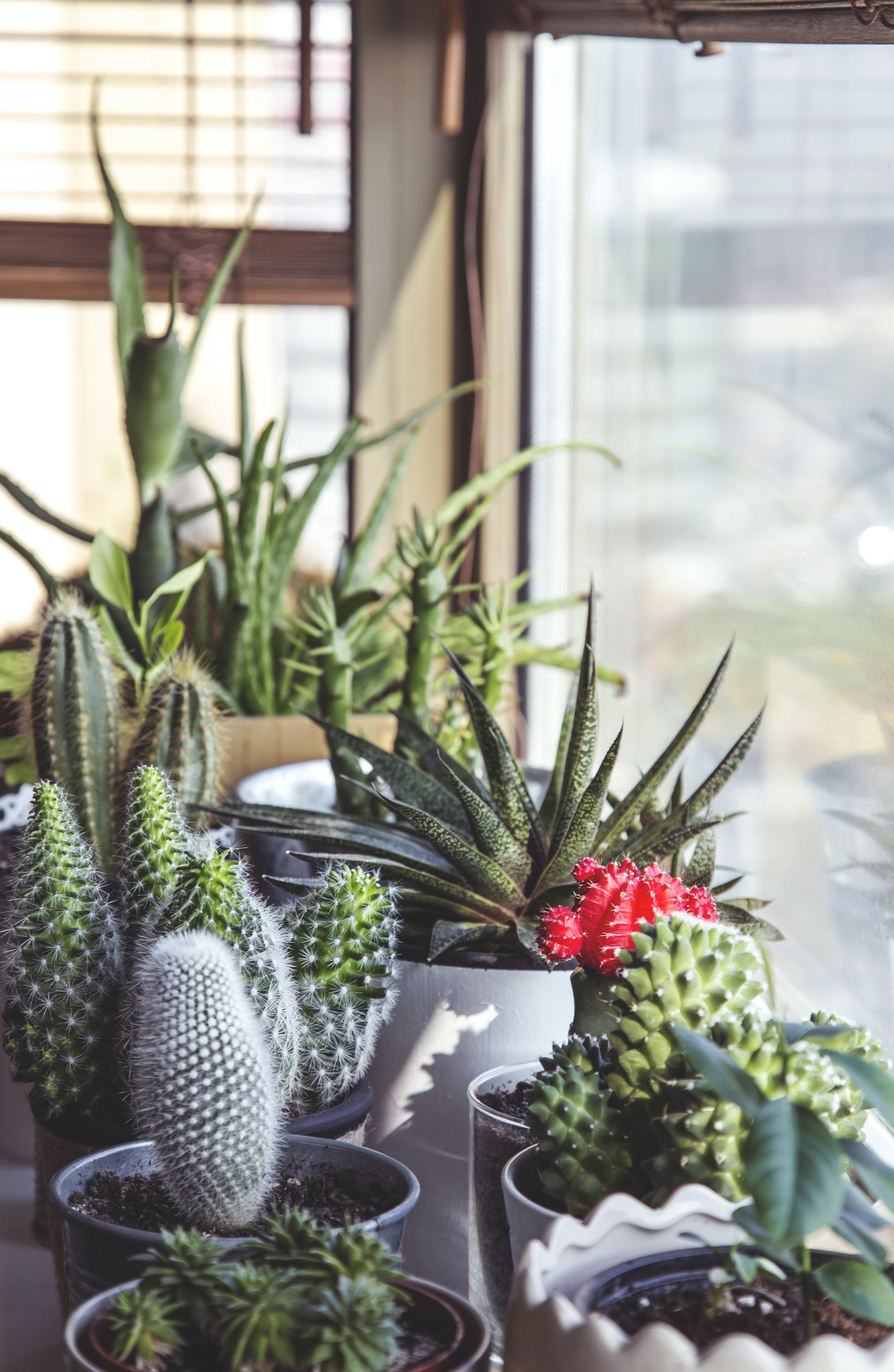 Succulent plants and cacti sit in pots in front of a window