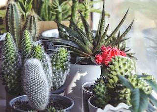 assorted-type cacti