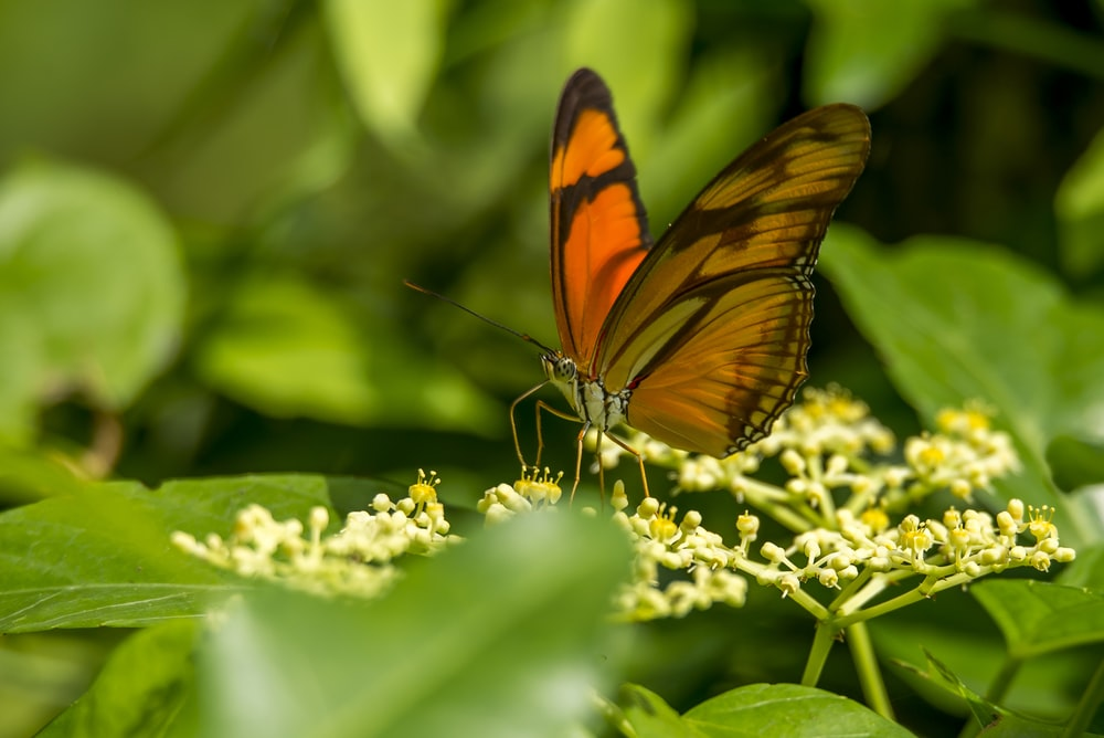 selective focus photography of orange butterfly perched on yellow petaled flower